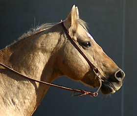 quarter-horse_portrait_01